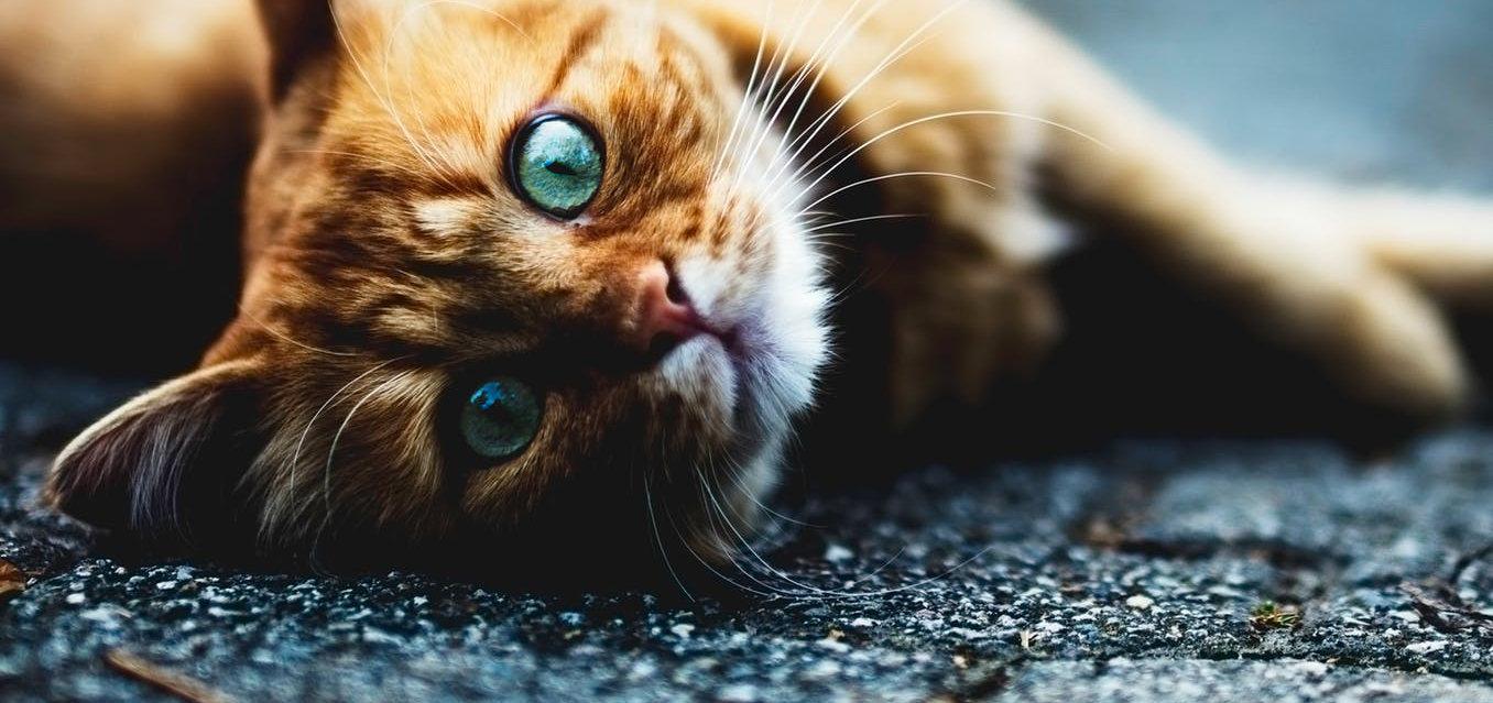 cremazione gatto